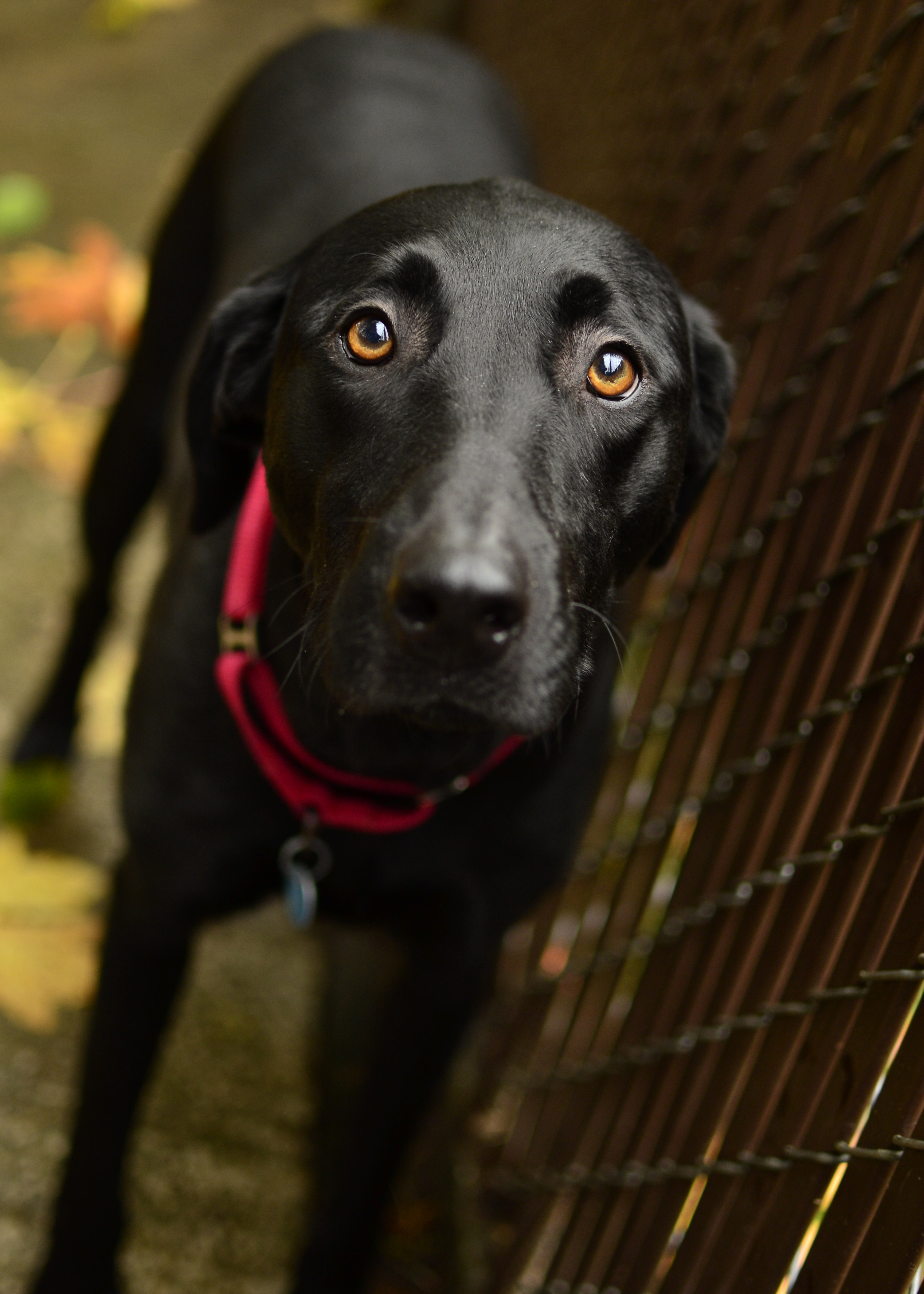 black dog | tdogpics